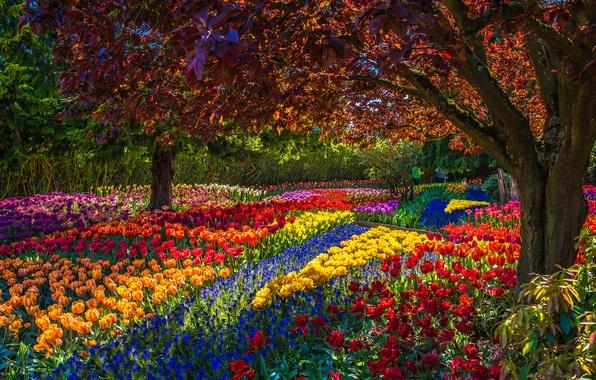 Картинка деревья, цветы, парк, весна, сад