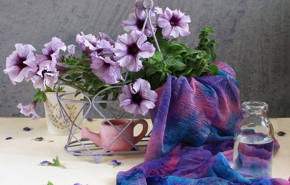 Картинка цветок, лето, вода, цветы, природа, сиреневый, нежность, бутылка, красота, букет, весна, лепестки, красиво, ткань, лейка, …