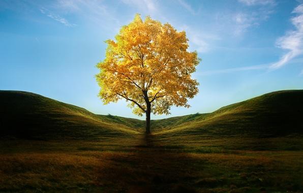 Картинка осень, трава, листья, дерево, холмы, тень, арт, желтое