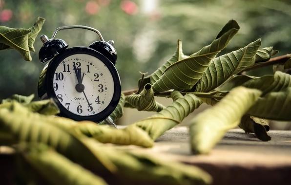 Картинка листья, время, часы, будильник