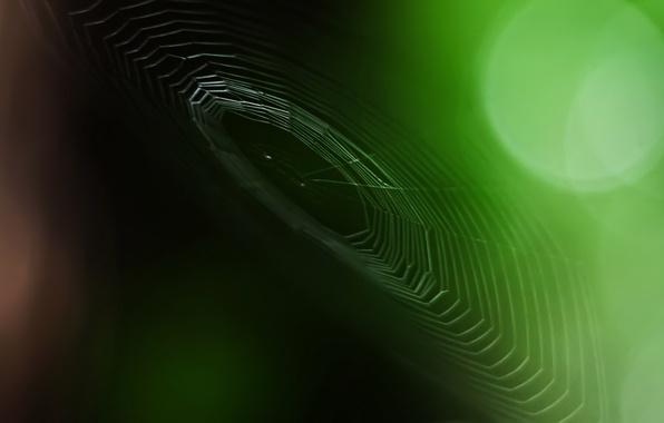 Картинка зелень, фокус, 149, Паутина