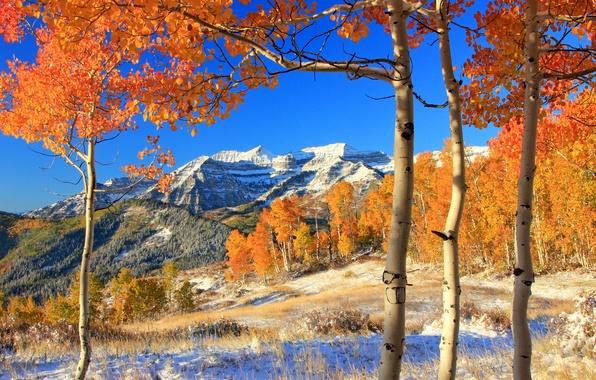 Картинка осень, лес, листья, снег, деревья, горы, желтые