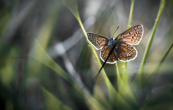 Картинка трава, солнце, макро, бабочка, крылья, размытость, травинка