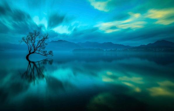 Картинка озеро, дерево, New Zealand, Wanaka
