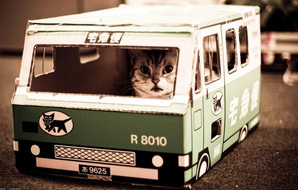 Картинка котик, Nekobasu, кошачий автобус