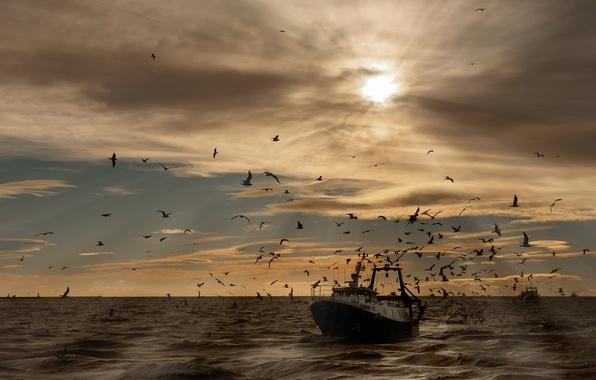 Картинка море, волны, небо, солнце, птицы, корабль, чайки
