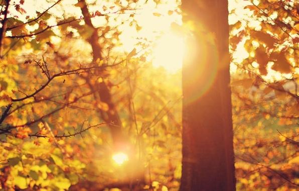 Картинка листья, солнце, макро, лучи, деревья, ветки, блики, фон, дерево, widescreen, обои, листва, день, wallpaper, широкоформатные, …
