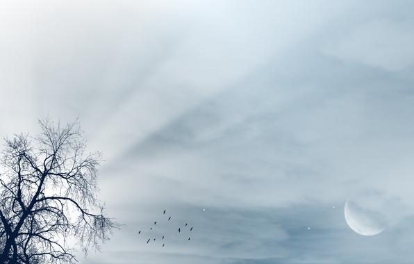 Картинка небо, лучи, свет, пейзаж, птицы, дерево, луна, moon, tree, luna, birds, rays