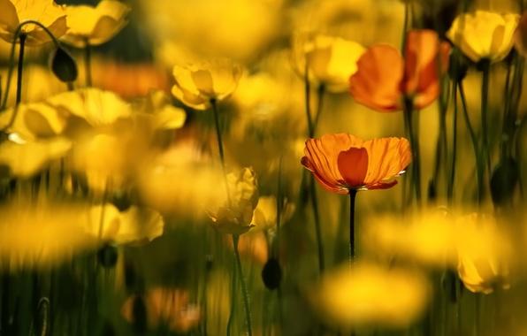 Картинка цветы, желтый, flower