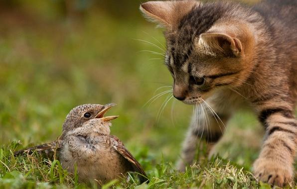 Картинка кошка, трава, кот, природа, котенок, птица, охота, инстинкт