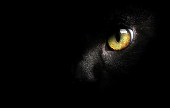 Картинка кошка, глаз, фон