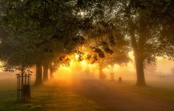Картинка свет, природа, парк, утро
