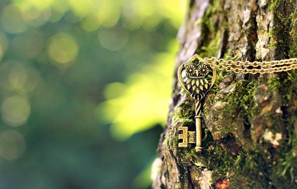 Картинка макро, дерево, сова, размытость, ключ, кора, цепочка, подвеска, боке, металлический