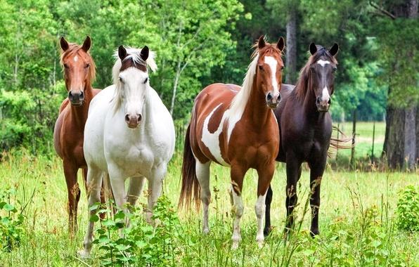 Картинка лес, животные, трава, деревья, природа, лошадь, жеребец, кони, лошади, красивые, жеребцы, скакуны, скакун