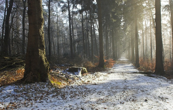 Картинка зима, дорога, осень, лес, деревья, природа, красота, утро, дымка
