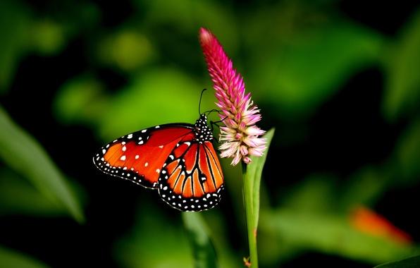Картинка поле, цветок, бабочка, крылья, лепестки, сад