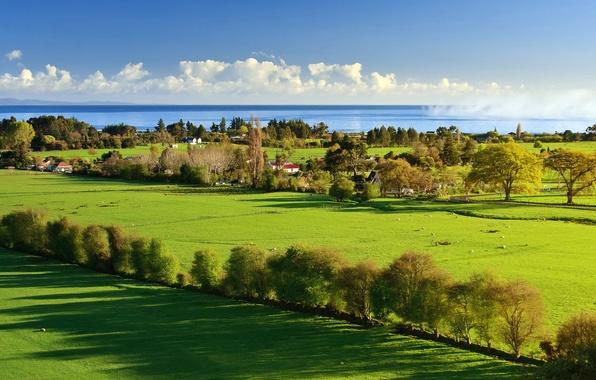 Картинка море, зелень, небо, трава, вода, облака, свет, деревья, пейзаж, природа, дома, тень, light, grass, sky, …