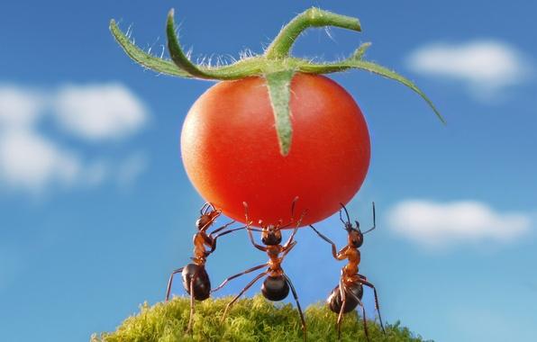 Шампунь ORGANIC SHOP Tomato Томатный Турбо Объём  Отзывы