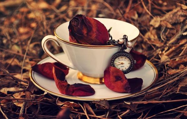 Картинка осень, трава, листья, часы, роза, лепестки, чашка, красная, блюдце