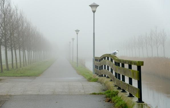 Картинка дорога, вода, пейзаж, туман, птица