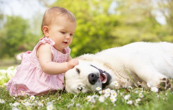 Картинка трава, радость, цветы, детство, игры, ребенок, собака, play, grass, happy, мода, dog, flowers, child, baby, …