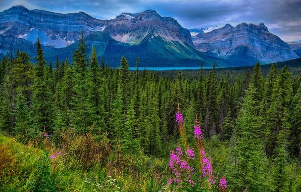 Картинка лес, горы, Канада, Альберта, Alberta, Canada, Jasper National Park, Скалистые горы, Национальный парк Джаспер, Canadian …