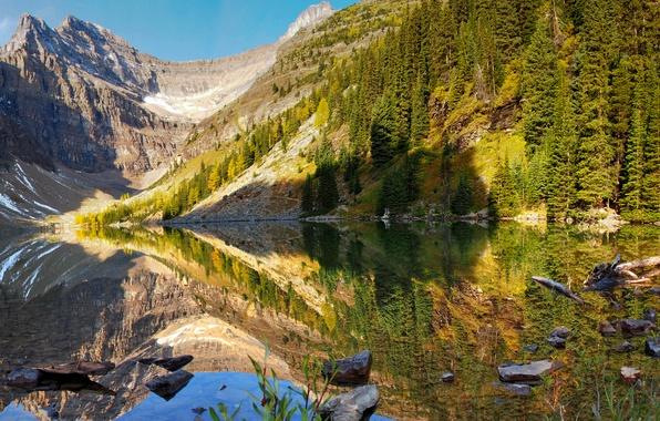 Картинка лес, вода, деревья, горы, озеро, отражение, камни, берег, Канада, коряги, Банф