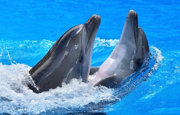 Картинка вода, блики, дельфины