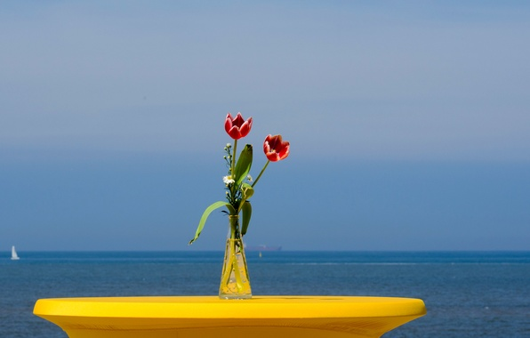 Картинка море, небо, цветы, яхта, тюльпаны, парус, ваза