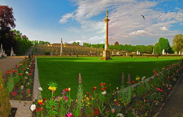 Картинка трава, цветы, дизайн, город, фото, газон, ландшафт, Германия, Potsdam, Brandenburg