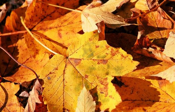 Картинка осень, природа, лист, макро фото