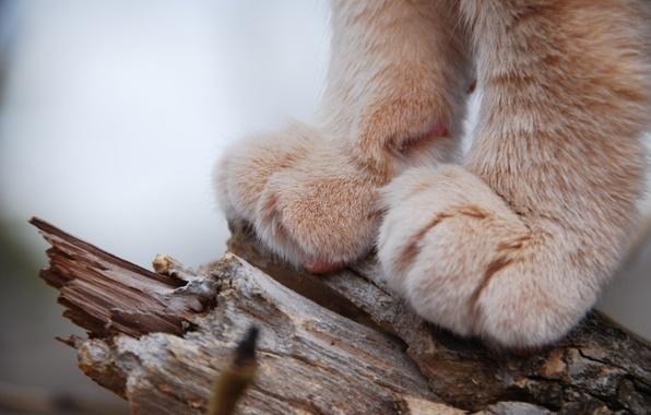 Картинка кошка, животные, лапы