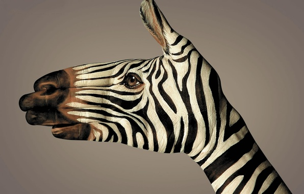 Картинка полоски, черно-белый, рука, зебра