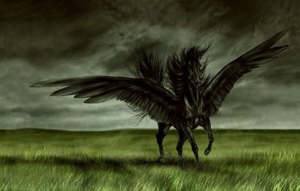 Черный лошадь крылья поле обои фото