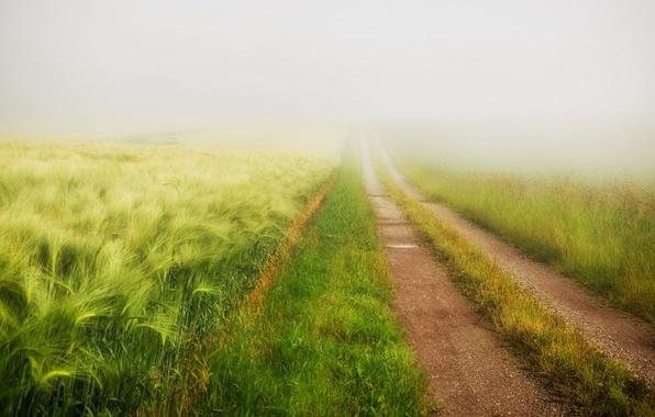 Картинка дорога, поле, лето, туман