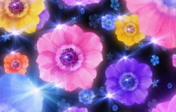 Картинка свет, цветы, коллаж, обои, блеск, лепестки