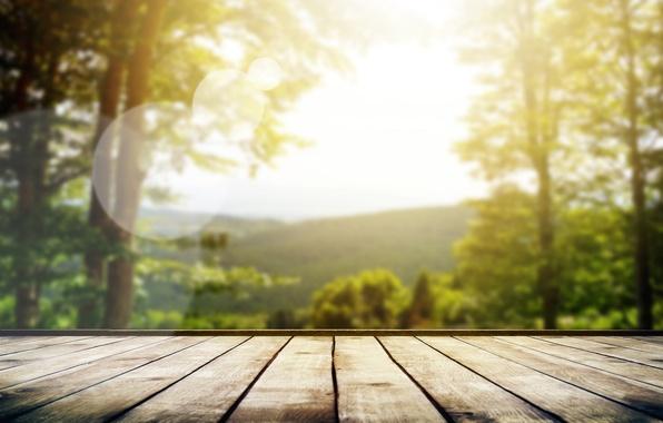 Картинка лес, лето, небо, солнце, макро, лучи, свет, деревья, природа, настроение, доски, фокус, размытие, утро, пол, …