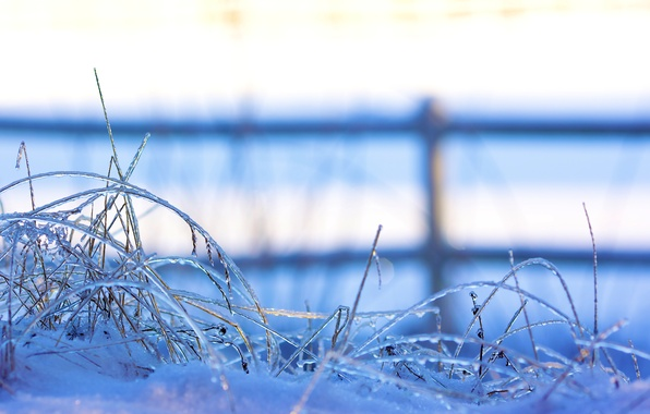 Картинка зима, трава, снег, природа, забор, лёд, ограждение, травинки, макро., заморозки, замороженные