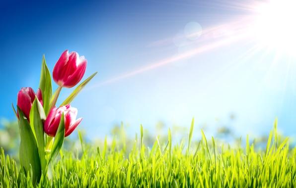 Картинка трава, солнце, цветы, весна, тюльпаны