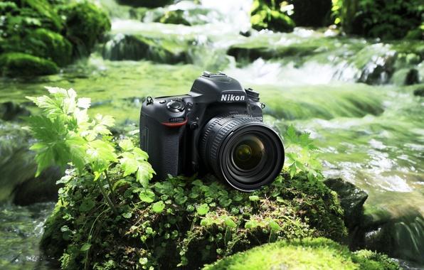 Картинка high-tech, Nikon, river, photography, digital, nature, camera, rocks, leather, asian, stream, japanese, oriental, asiatic, vegetation, …