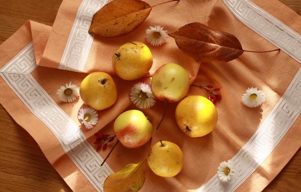 Фото обои салфетка, натюрморт, красиво, фрукты, груши, яблоки, осень