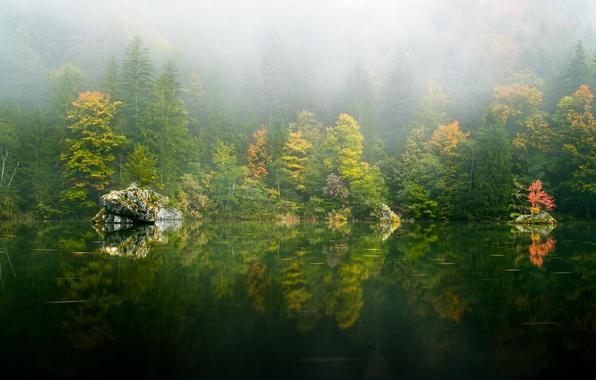 Картинка осень, лес, деревья, природа, озеро, отражение, дымка