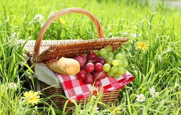 Картинка лето, трава, корзина, ромашки, хлеб, виноград, пикник, батон