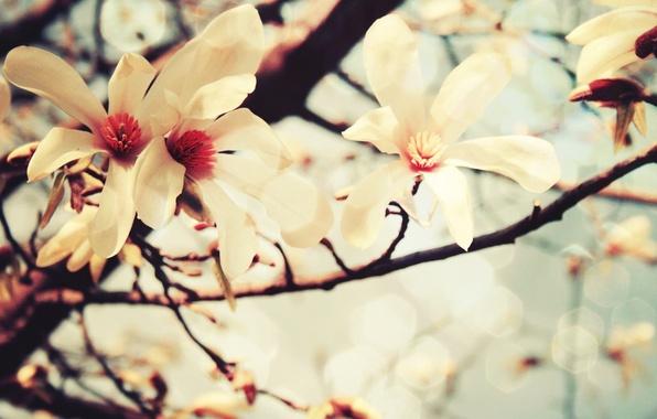 Картинка цвета, цветы, дерево, пастель, ваниль
