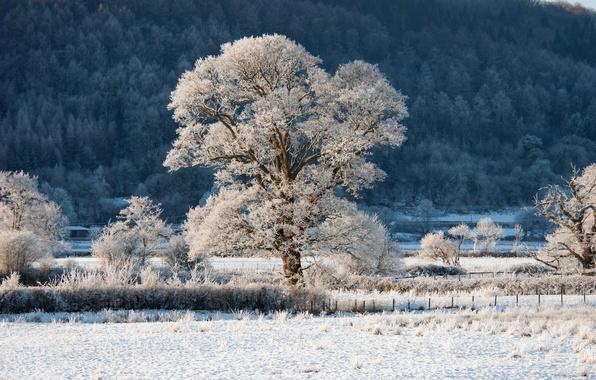 Картинка зима, иней, лес, снег, деревья, дерево, ограда, склон, холм, кустарник