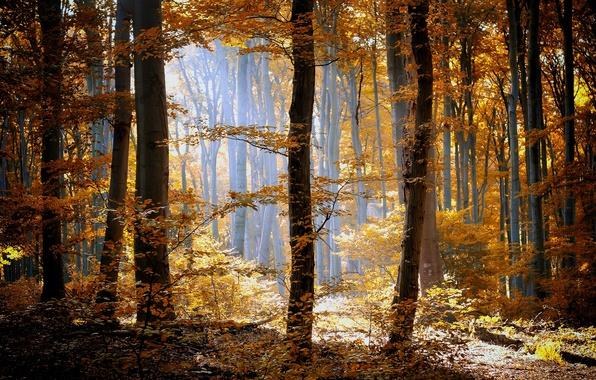 Картинка осень, лес, трава, листья, солнце, свет, деревья, природа, желтые, оранжевые