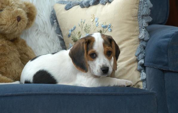 Картинка голубой, игрушка, собака, кресло, мишка, милый, щенок, подушка, обои от lolita777