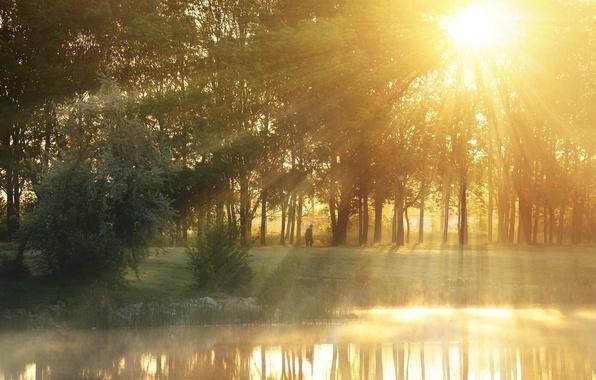 Картинка зелень, листья, вода, солнце, лучи, деревья, природа, озеро, река, фон, дерево, обои, листва, человек, wallpaper, …