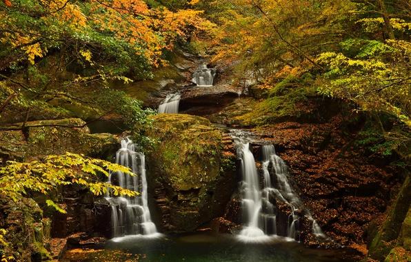 Картинка осень, лес, деревья, ручей, скалы, водопад, поток