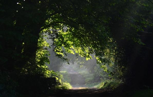 Картинка листья, деревья, природа, фон, дерево, widescreen, обои, wallpaper, листочки, тропинка, trees, широкоформатные, background, leaves, tree, …